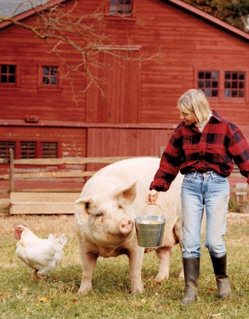 Pig friend.
