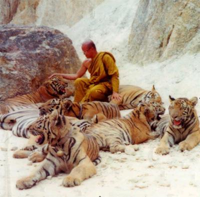 Compassion tigers