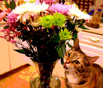 Sophieandtheflowers