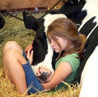 Cow hug