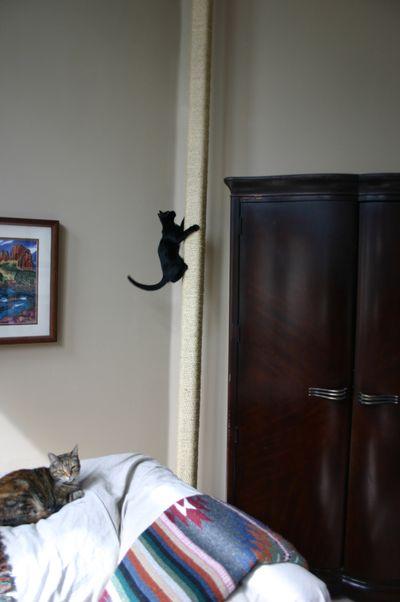 Cat post3