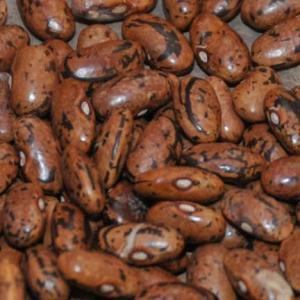 Rattlesnack Pole Bean
