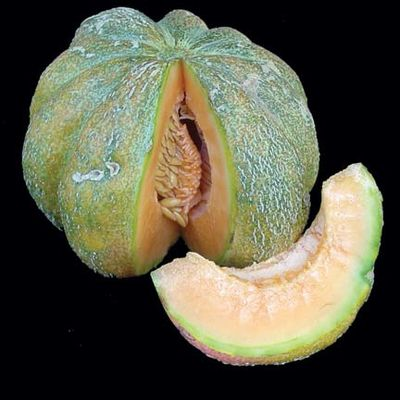 Emerald gem melon