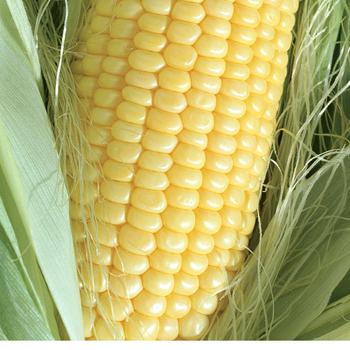 Corn_truegold