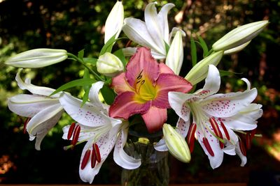 Lilies from yard