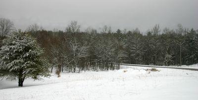 Snow 01-10-11 -5
