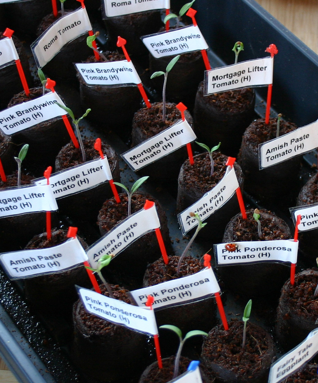 Wahsega Valley Farm: Happy seedlings