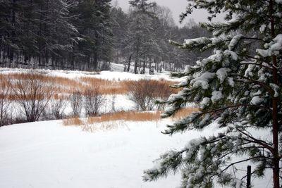 Snow 01-10-11 -2