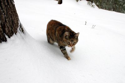 Snowsophie