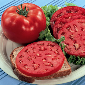 Tomato parks whopper cr improved hybrid