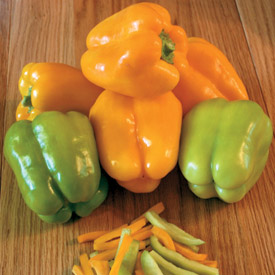 Pepper flavorburst hybrid
