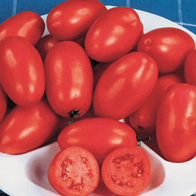 Organic tomato roma