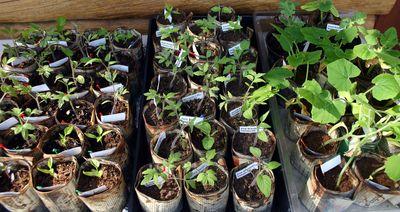 Seedings 4-11