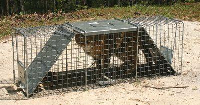 Caged Sophie