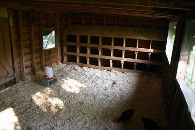 Coop - nest boxes