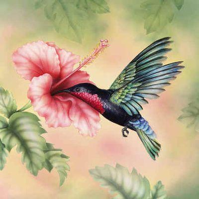 Purple-throated_Carib_Hummingbird72
