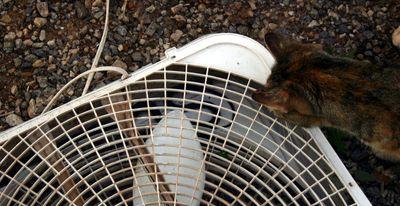 Snake in fan
