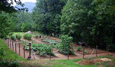 Summer garden 2010