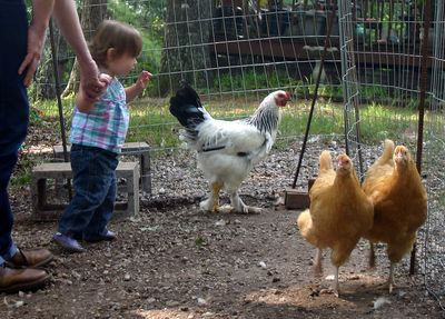 Margot and chickens