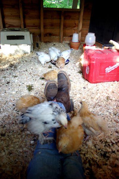 Chicks visiting