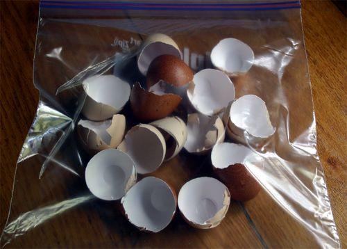 Eggs in bag