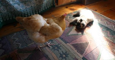 Dusty and Flapper5
