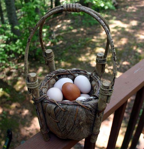 Eggs today