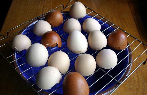Eggs drying