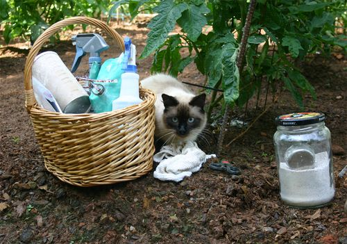 Garden - basket and Dusty