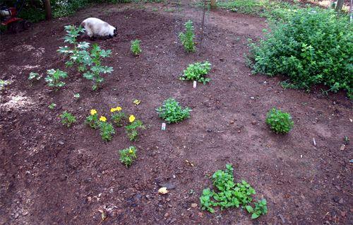 Garden - herbs