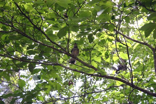 Bird in tree 3