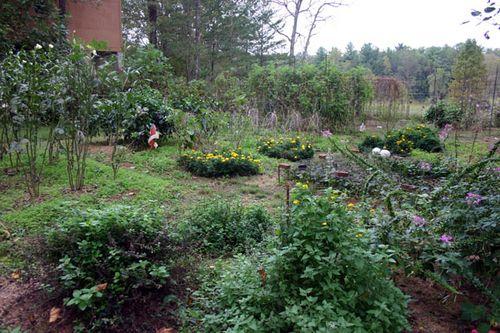 Z ignored garden