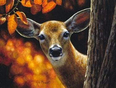 Deer_surprise_2